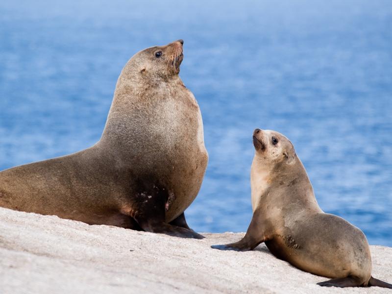 impossibly beautiful marine life in sydney harbour  u2013 part 3  u2013 content catnip