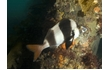 Enlarge image of Magpie Perch