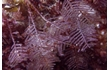 Enlarge image of Hydroid