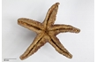 Enlarge image of Seastar